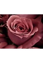 Масло Жожоба Голден и Абсолют Розы 10мл
