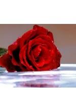 Цветочная вода Роза (Органик), 50мл